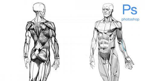世界技能大赛人体解剖